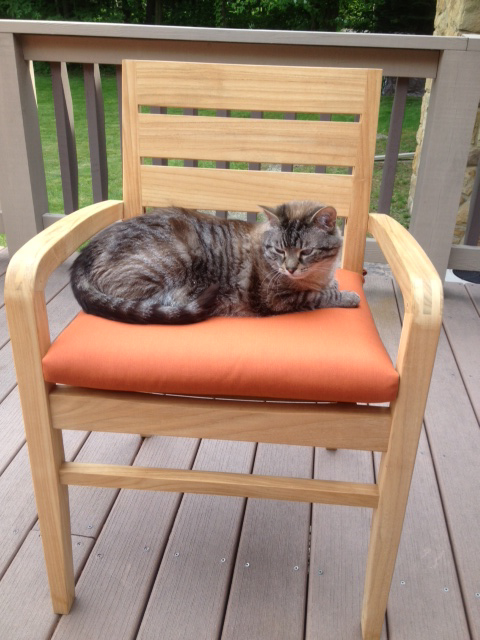 Goldenteak Teak Ventura Stacking Chair (ST-CH-L-VENT-A) with cushion and cat