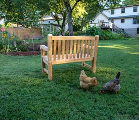 Teak Hyde Park 4ft Bench - Customer Photo with Chickens