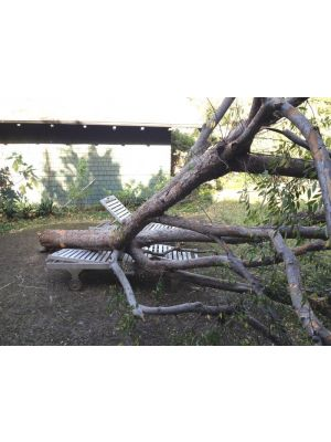 Teak Sun Lounger withstands a fallen tree