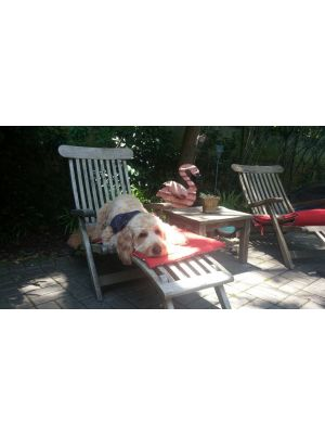 Teak Steamer Chairs with Pets - Goldenteak Customer Photo